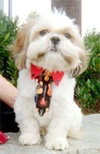neckties for dogs